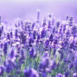 Lavender Hydrosol Floral Water