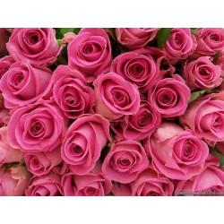 "Pafume oil ""Garden Rose"""