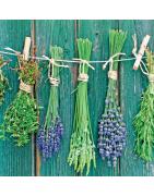 Herbs&Plants